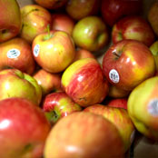 blog_may_apples