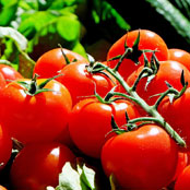 blog_may_cherry_tomatoes