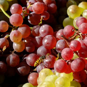 blog_may_grapes