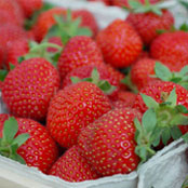 blog_may_strawberries