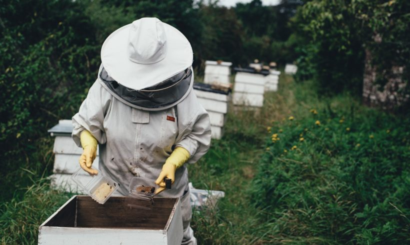 Bee Propolis – Your Protector