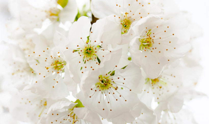 Learn About Flower Pollen Extracts